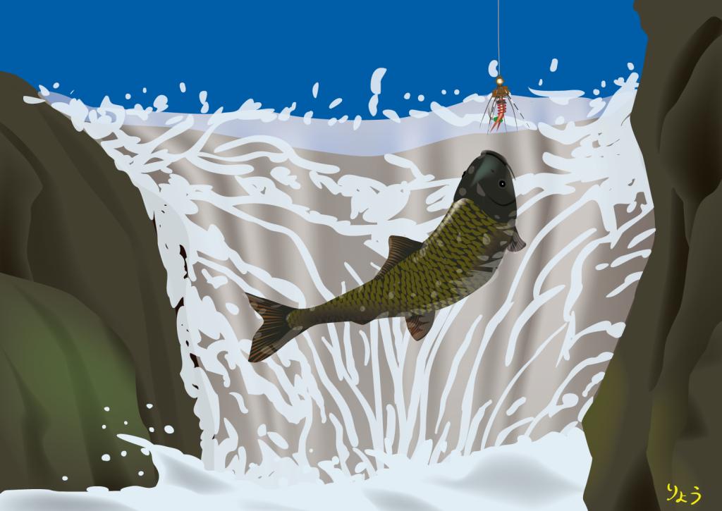鯉の滝登り 毛ばり carp